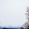 金沢 さくらめぐり 2015 桜橋・W坂